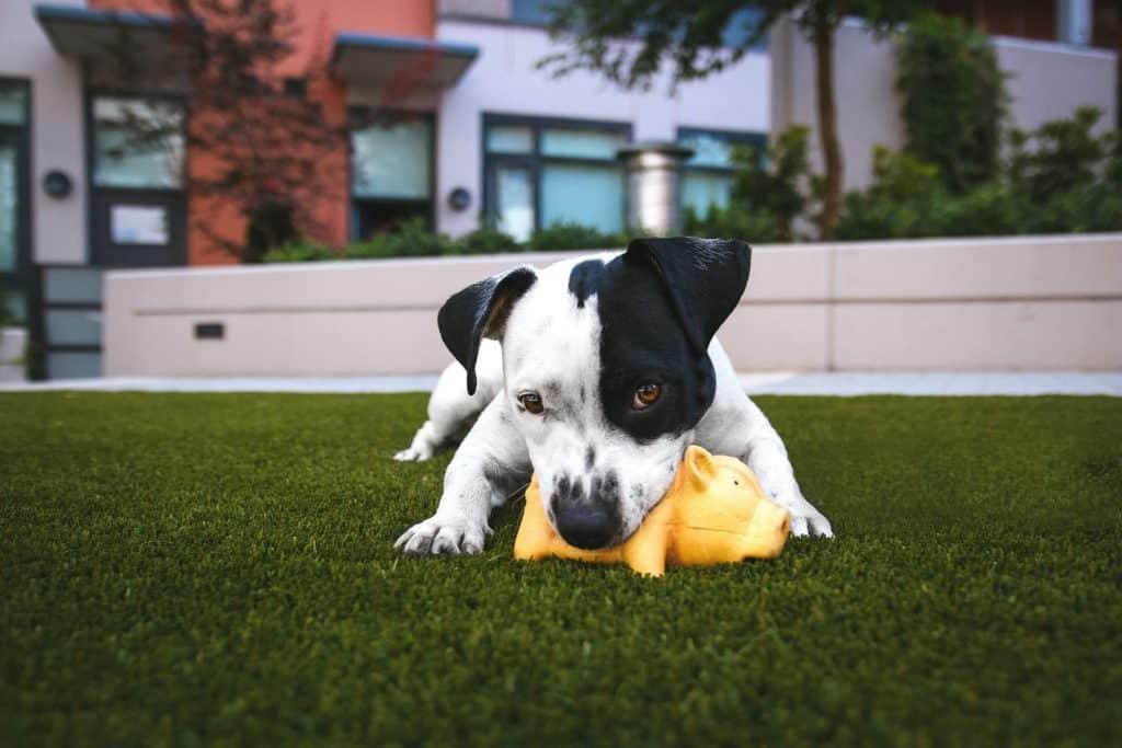 Ideas para cuentas de mascotas